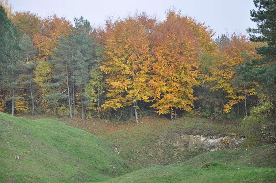 Beauté d'une forêt sépulture.
